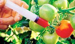 39-GMO