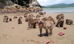 08-The Hundredth Monkey Effect