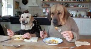 01-Dogs Dining