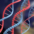 44-DNA 1