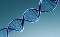 44-DNA 2