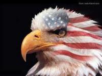 44-Eagle USA